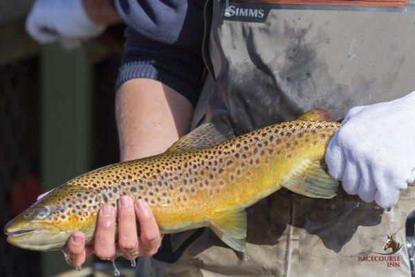 Tasmanian Rainbow trout.